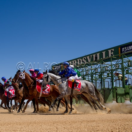 Birdsville, Race 1, Starting Gate, Celestial Grey, Allanah Badger_02-09-17, Sharon Lee Chapman_0250