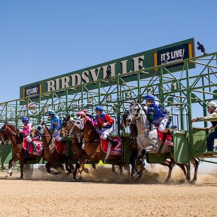 Birdsville, Race 1, Starting Gate, Celestial Grey, Allanah Badger_02-09-17, Sharon Lee Chapman_0218
