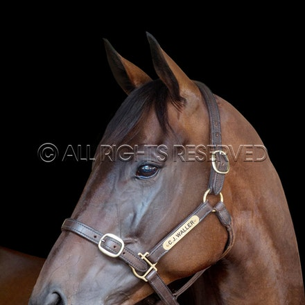 WINX BIOGRAPHY COVER SHOT