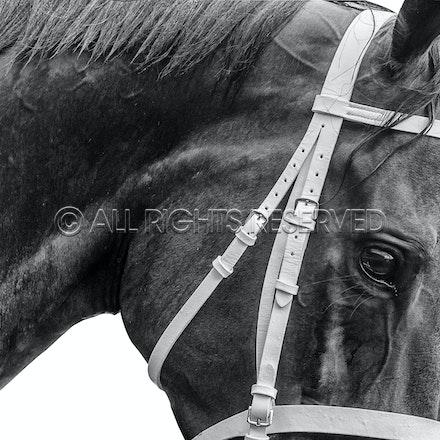 Winx Black and White Portrait
