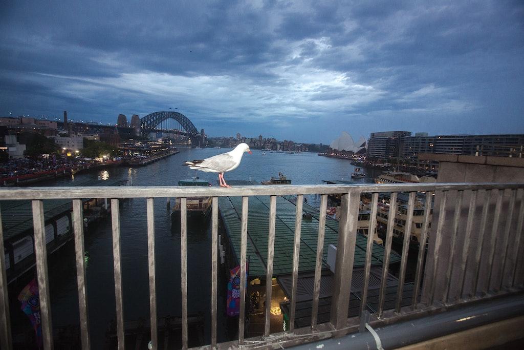 19003-023-SydneyNYE19