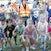 Bribie Race 3 Sun 163156350