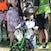 Bribie Race 4 Sat 132310140