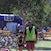 Bribie Race 4 Sat 134453190