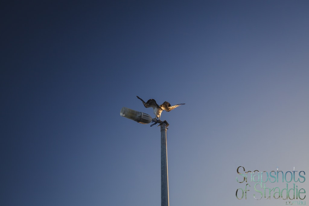 Osprey light pole - Snapshots of Straddie. Wall Art Landscape and Seascape Photography by Julie Sisco. Photos from North Stradbroke Island, Queensland,...
