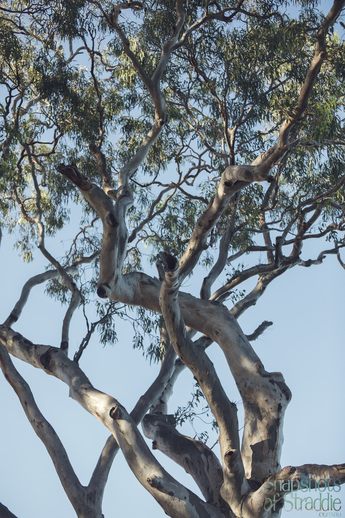 Gum tree - Snapshots of Straddie. Wall Art Landscape and Seascape Photography by Julie Sisco. Photos from North Stradbroke Island, Queensland, Australia....