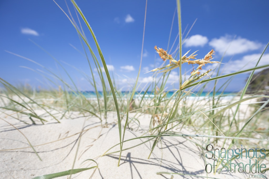 Dune Grass - Snapshots of Straddie. Wall Art Landscape and Seascape Photography by Julie Sisco. Photos from North Stradbroke Island, Queensland, Australia....
