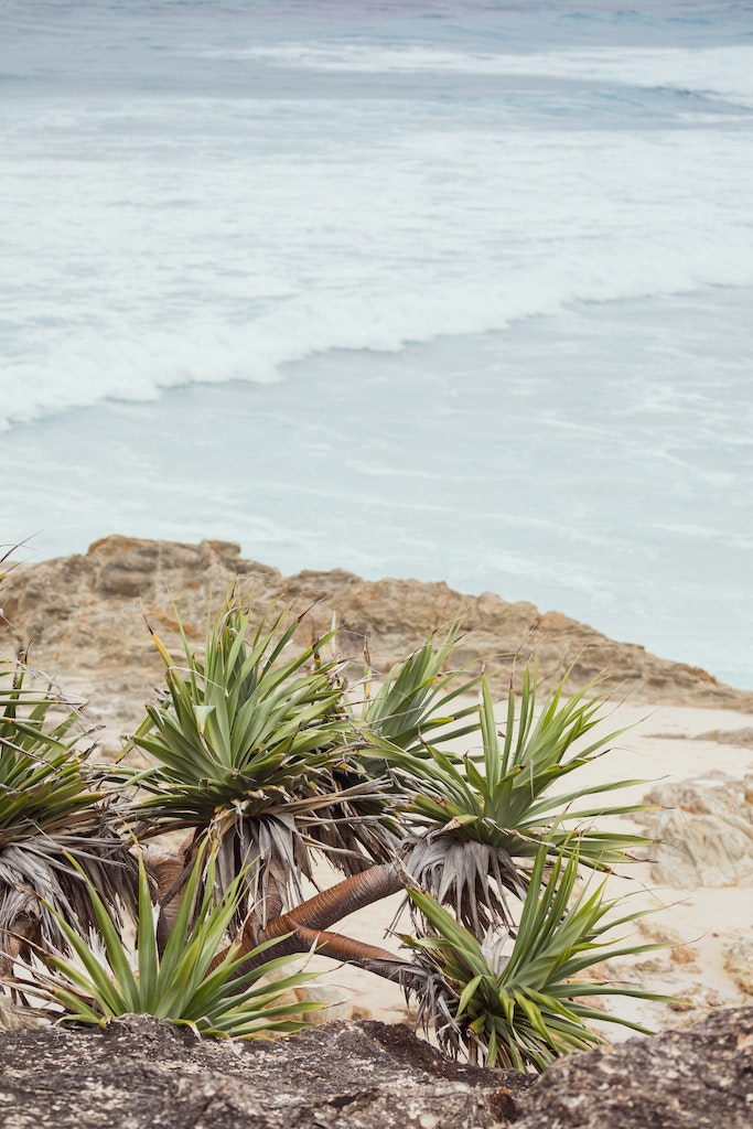 Pandanus - Snapshots of Straddie. Wall Art Landscape and Seascape Photography by Julie Sisco. Photos from North Stradbroke Island, Queensland, Australia....