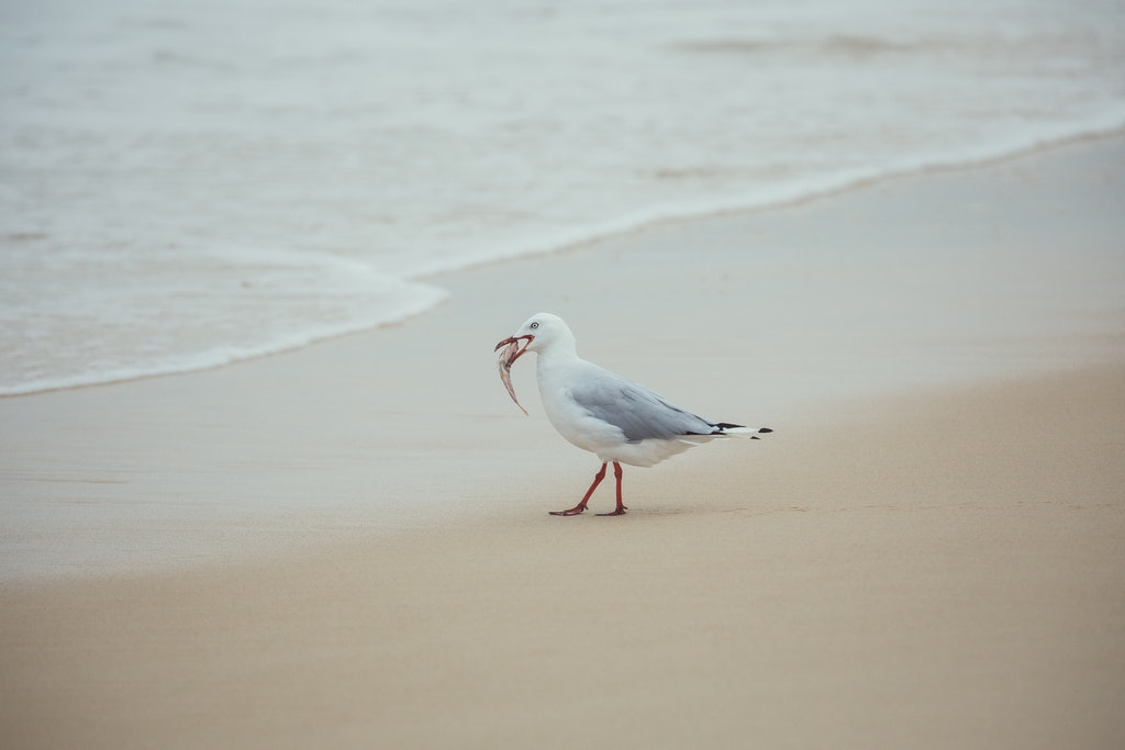 Seagull - Snapshots of Straddie. Wall Art Landscape and Seascape Photography by Julie Sisco. Photos from North Stradbroke Island, Queensland, Australia....