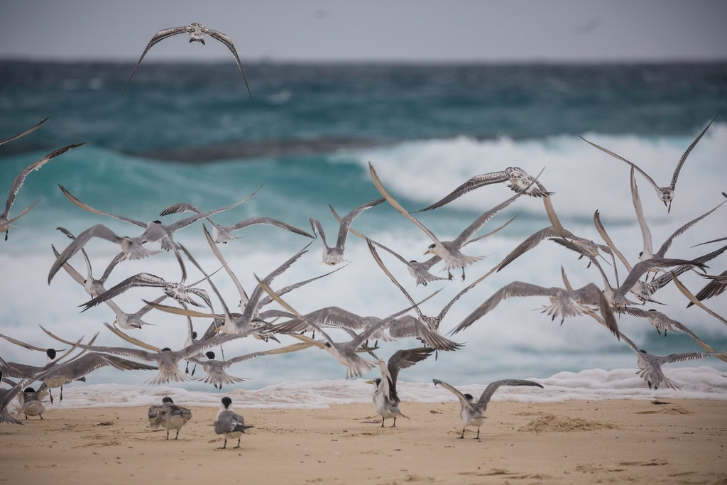 Flight of the Terns - Snapshots of Straddie. Wall Art Landscape and Seascape Photography by Julie Sisco. Photos from North Stradbroke Island, Queensland,...
