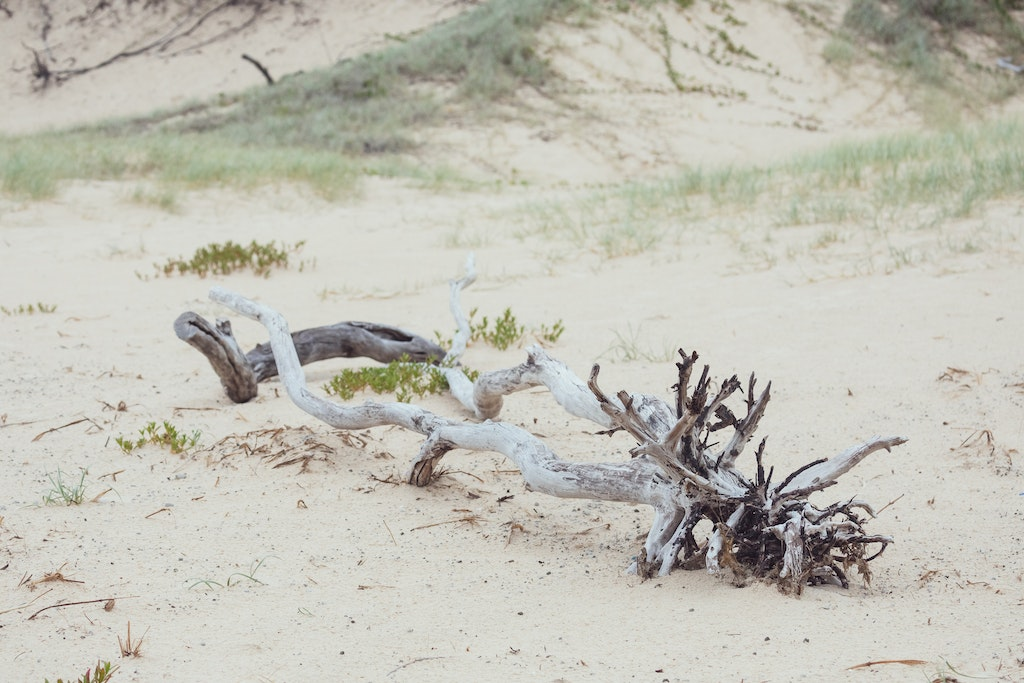 Driftwood on Main - Snapshots of Straddie. Wall Art Landscape and Seascape Photography by Julie Sisco. Photos from North Stradbroke Island, Queensland,...