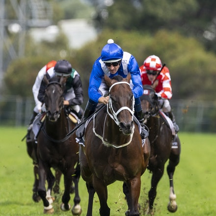 Winx-BowmanHugh-20190323-8687 - WINX (Street Cry x Vegas Showgirl) wins the G1 George Ryder Stakes for the 4th successive year, and her 32nd straight victory....