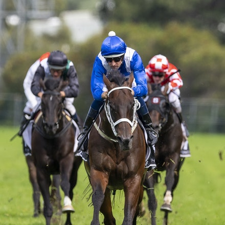 Winx-BowmanHugh-20190323-8690 - WINX (Street Cry x Vegas Showgirl) wins the G1 George Ryder Stakes for the 4th successive year, and her 32nd straight victory....