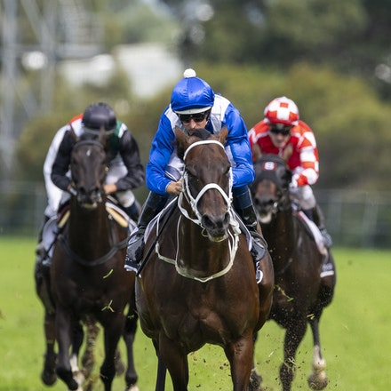 Winx-BowmanHugh-20190323-8692 - WINX (Street Cry x Vegas Showgirl) wins the G1 George Ryder Stakes for the 4th successive year, and her 32nd straight victory....
