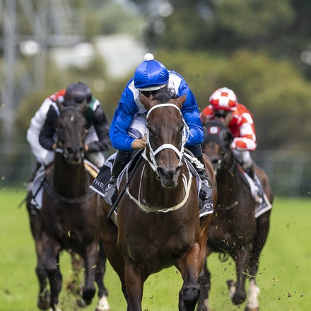 Winx-BowmanHugh-20190323-8693_1 - WINX (Street Cry x Vegas Showgirl) wins the G1 George Ryder Stakes for the 4th successive year, and her 32nd straight...