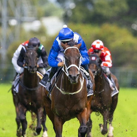 Winx-BowmanHugh-20190323-8693 - WINX (Street Cry x Vegas Showgirl) wins the G1 George Ryder Stakes for the 4th successive year, and her 32nd straight victory....
