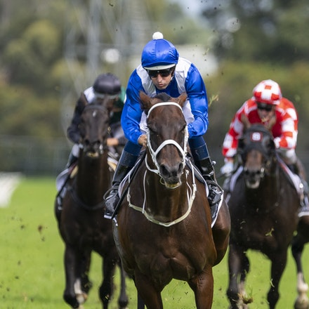 Winx-BowmanHugh-20190323-8694 - WINX (Street Cry x Vegas Showgirl) wins the G1 George Ryder Stakes for the 4th successive year, and her 32nd straight victory....