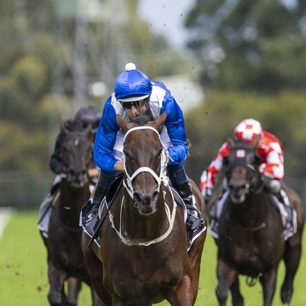 Winx-BowmanHugh-20190323-8695 - WINX (Street Cry x Vegas Showgirl) wins the G1 George Ryder Stakes for the 4th successive year, and her 32nd straight victory....