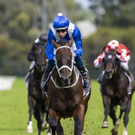 Winx-BowmanHugh-20190323-8696 - WINX (Street Cry x Vegas Showgirl) wins the G1 George Ryder Stakes for the 4th successive year, and her 32nd straight victory....
