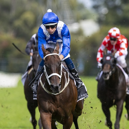 Winx-BowmanHugh-20190323-8698 - WINX (Street Cry x Vegas Showgirl) wins the G1 George Ryder Stakes for the 4th successive year, and her 32nd straight victory....