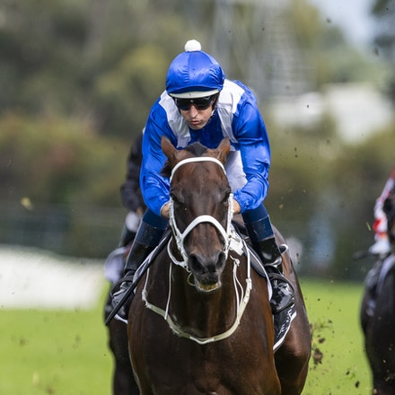 Winx-BowmanHugh-20190323-8699 - WINX (Street Cry x Vegas Showgirl) wins the G1 George Ryder Stakes for the 4th successive year, and her 32nd straight victory....