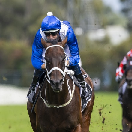 Winx-BowmanHugh-20190323-8700 - WINX (Street Cry x Vegas Showgirl) wins the G1 George Ryder Stakes for the 4th successive year, and her 32nd straight victory....
