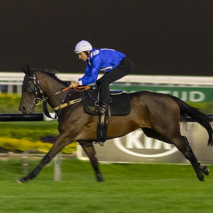 20190411 - Winx Track Gallop - Rosehill Gardens - Winx has her final gallop and media call before her final race start, the Group 1 Queen Elizabeth Stakes.