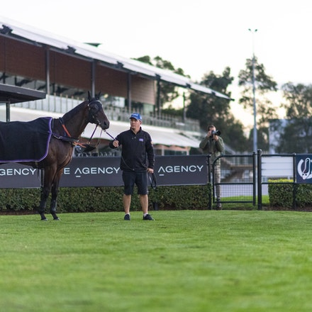 Winx-WallerChris-20190411-6729 - WINX is spooked by the newspaper photographer behind the fence shortly after completing her track gallop before her final...