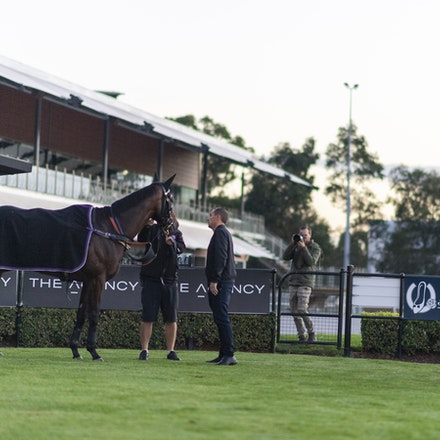 Winx-WallerChris-20190411-6799 - WINX is spooked by the newspaper photographer behind the fence shortly after completing her track gallop before her final...
