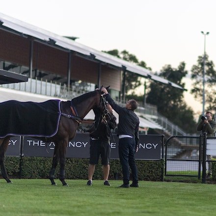 Winx-WallerChris-20190411-6808 - WINX is spooked by the newspaper photographer behind the fence shortly after completing her track gallop before her final...