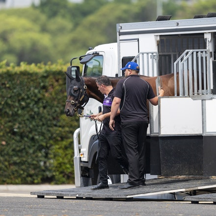 Winx-Arriving-20190302-1491 - Champion WINX arrives at Royal Randwick before the G1 Chipping Norton Stakes.  She is being led by regular strapper Umut...