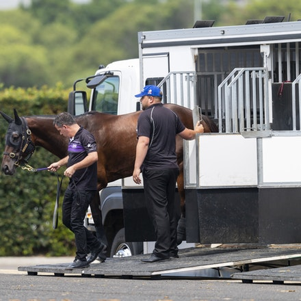 Winx-Arriving-20190302-1498 - Champion WINX arrives at Royal Randwick before the G1 Chipping Norton Stakes.  She is being led by regular strapper Umut...