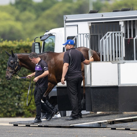 Winx-Arriving-20190302-1497 - Champion WINX arrives at Royal Randwick before the G1 Chipping Norton Stakes.  She is being led by regular strapper Umut...