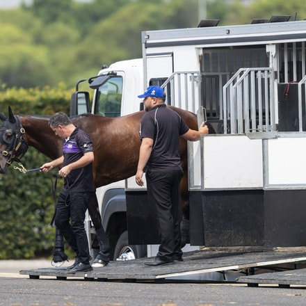 Winx-Arriving-20190302-1499 - Champion WINX arrives at Royal Randwick before the G1 Chipping Norton Stakes.  She is being led by regular strapper Umut...