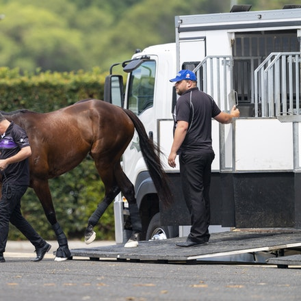 Winx-Arriving-20190302-1509 - Champion WINX arrives at Royal Randwick before the G1 Chipping Norton Stakes.  She is being led by regular strapper Umut...