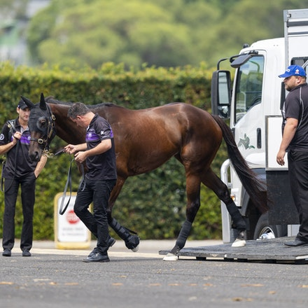 Winx-Arriving-20190302-1511 - Champion WINX arrives at Royal Randwick before the G1 Chipping Norton Stakes.  She is being led by regular strapper Umut...
