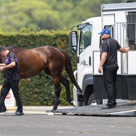 Winx-Arriving-20190302-1513 - Champion WINX arrives at Royal Randwick before the G1 Chipping Norton Stakes.  She is being led by regular strapper Umut...