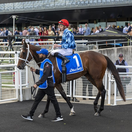 Funstar-McDonaldJames-20191005-5585 - at Royal Randwick.  05 October 2019  © The Image is Everything - Bronwen Healy & Darren Tindale Photography   Photo:...