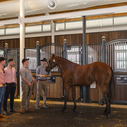 2018 Inglis Easter Yearling Sale - The 2018 Inglis Easter Yearling Sale, held at Riverside Sales Complex from 9 to 11 April 2018.