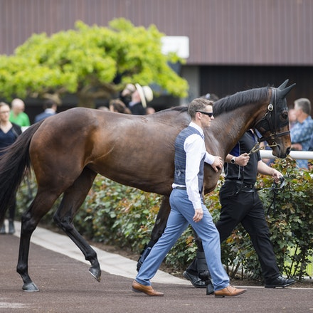 Winx-10072017-6681 - Winx Fever.  WINX (Street Cry - Vegas Showgirl) arrives at Flemington Racecourse.   Photo - Bronwen Healy.  The Image is Everything....