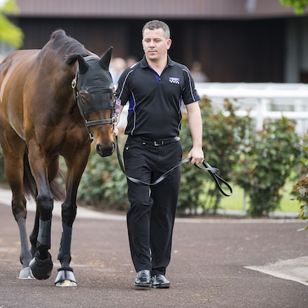 Winx-10072017-6906 - Winx Fever.  WINX (Street Cry - Vegas Showgirl) arrives at Flemington Racecourse.   Photo - Bronwen Healy.  The Image is Everything....