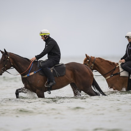 Winx-CaddenBen-10222017-0685 - WINX (brown) and RELIGIFY (chestnut) have a swim at Altona Beach.  Photo - Bronwen Healy.  The Image is Everything.  Bronwen...
