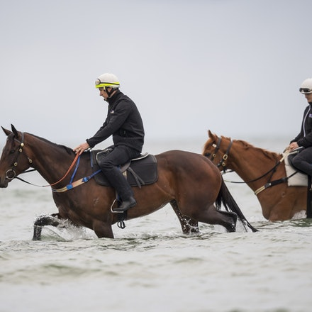 Winx-CaddenBen-10222017-0686 - WINX (brown) and RELIGIFY (chestnut) have a swim at Altona Beach.  Photo - Bronwen Healy.  The Image is Everything.  Bronwen...