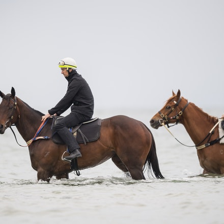 Winx-CaddenBen-10222017-0707 - WINX (brown) and RELIGIFY (chestnut) have a swim at Altona Beach.  Photo - Bronwen Healy.  The Image is Everything.  Bronwen...