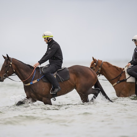 Winx-CaddenBen-10222017-0687 - WINX (brown) and RELIGIFY (chestnut) have a swim at Altona Beach.  Photo - Bronwen Healy.  The Image is Everything.  Bronwen...