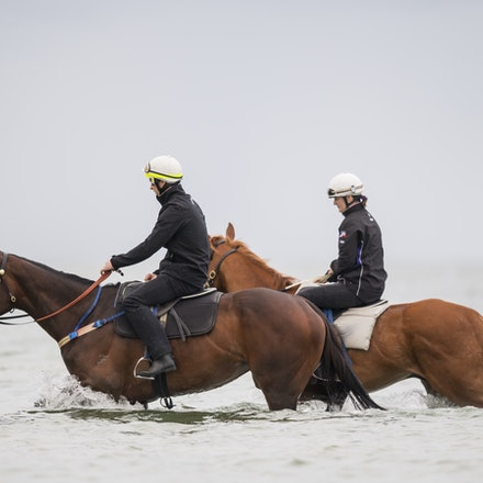 Winx-CaddenBen-10222017-0724 - WINX (brown) and RELIGIFY (chestnut) have a swim at Altona Beach.  Photo - Bronwen Healy.  The Image is Everything.  Bronwen...