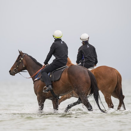 Winx-CaddenBen-10222017-0752 - WINX (brown) and RELIGIFY (chestnut) have a swim at Altona Beach.  Photo - Bronwen Healy.  The Image is Everything.  Bronwen...