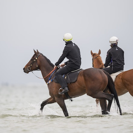 Winx-CaddenBen-10222017-0753 - WINX (brown) and RELIGIFY (chestnut) have a swim at Altona Beach.  Photo - Bronwen Healy.  The Image is Everything.  Bronwen...