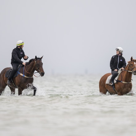 Winx-CaddenBen-10222017-0880 - WINX (brown) and RELIGIFY (chestnut) have a swim at Altona Beach.  Photo - Bronwen Healy.  The Image is Everything.  Bronwen...