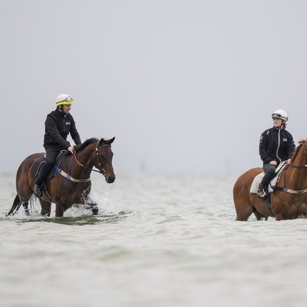 Winx-CaddenBen-10222017-0888 - WINX (brown) and RELIGIFY (chestnut) have a swim at Altona Beach.  Photo - Bronwen Healy.  The Image is Everything.  Bronwen...